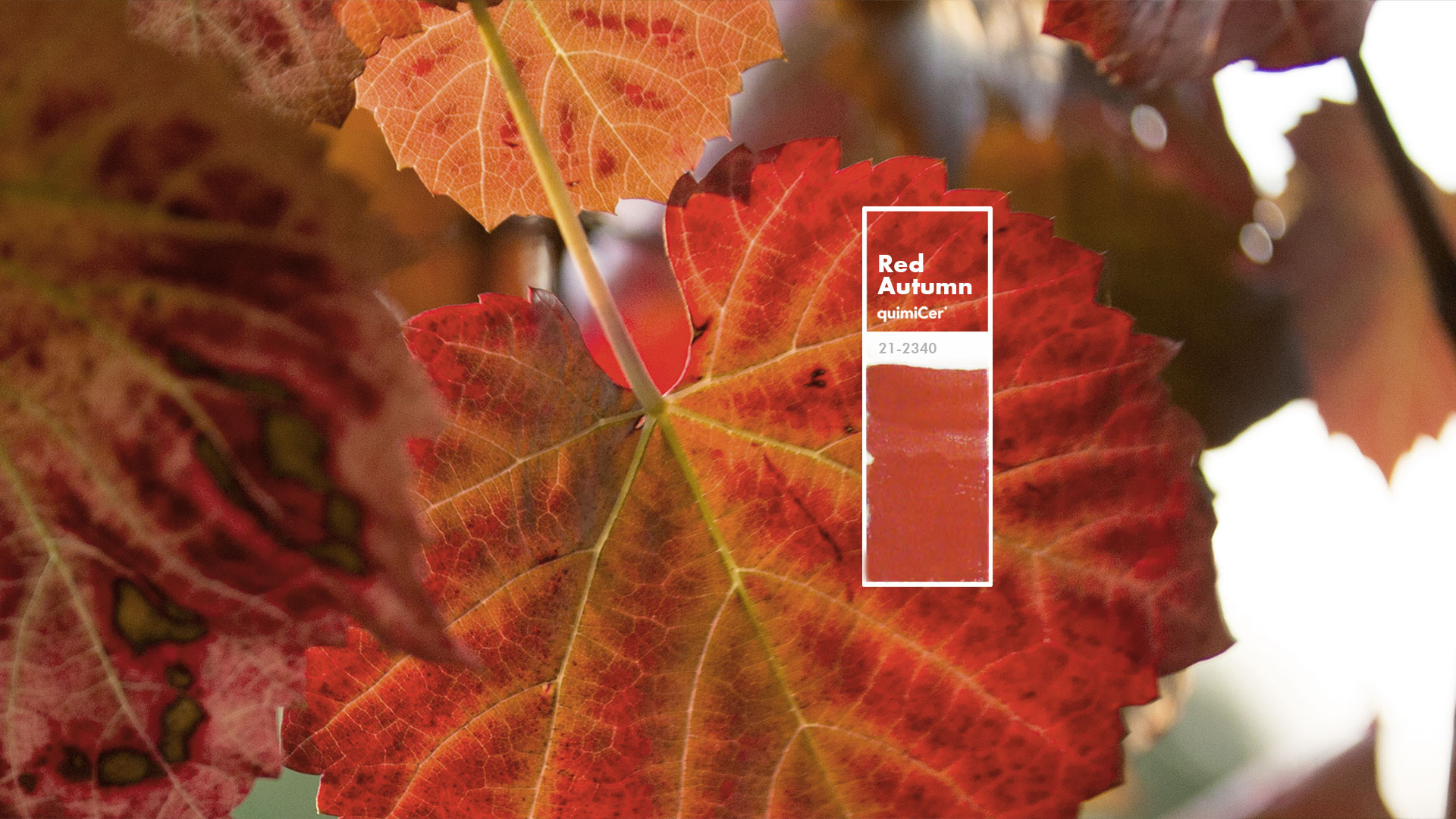 red<br />autumn